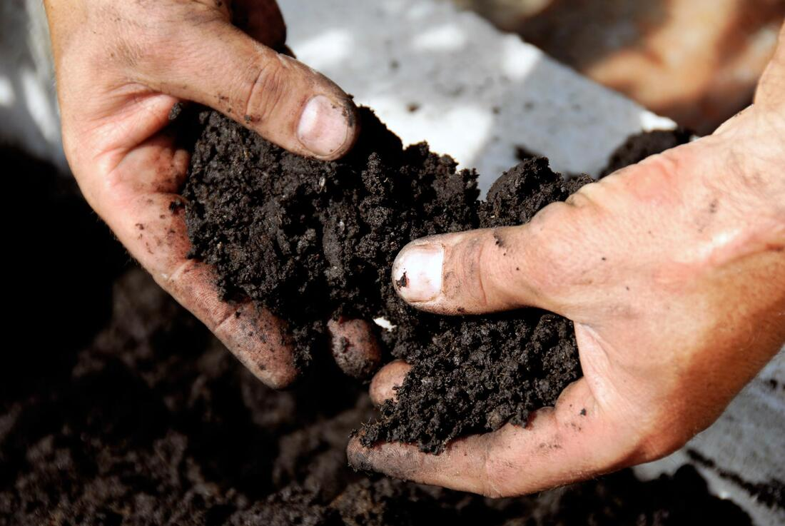 man putting some fertilization on the soil