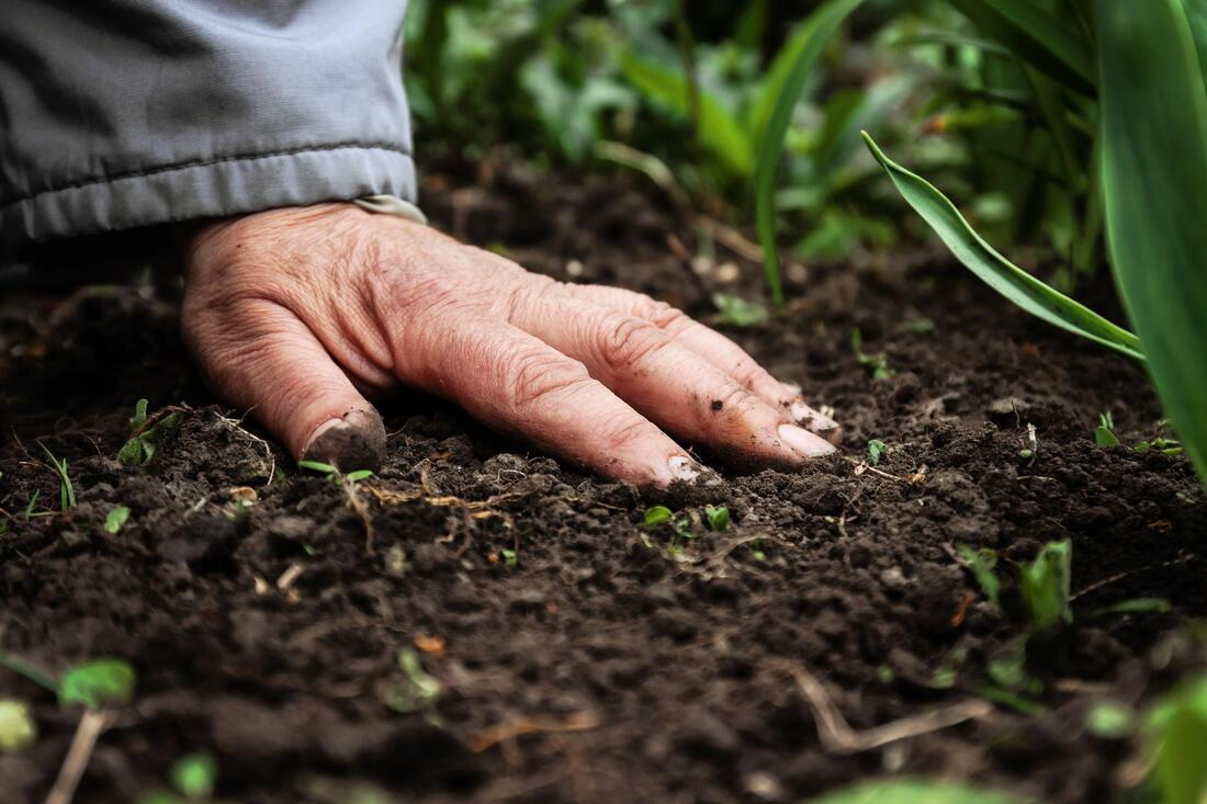 old man's hand is touching the soil on the ground